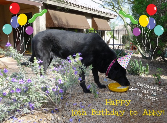 Abby Birthday